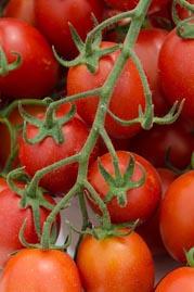 עגבניה מיני פלאם 703.jpg